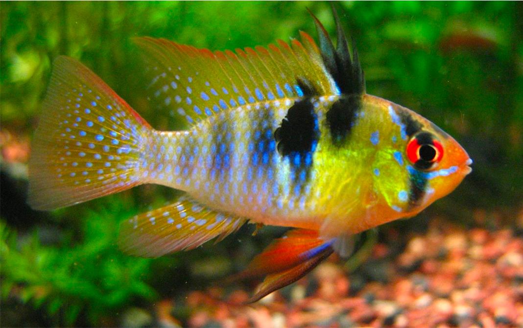 pesci tropicali online vendita online pesci tropicali