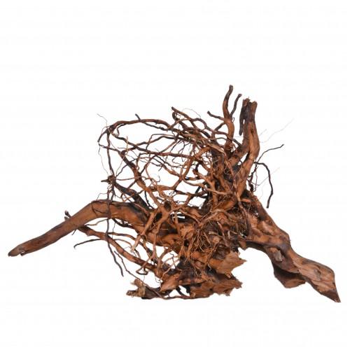 spider-root-2-500x500