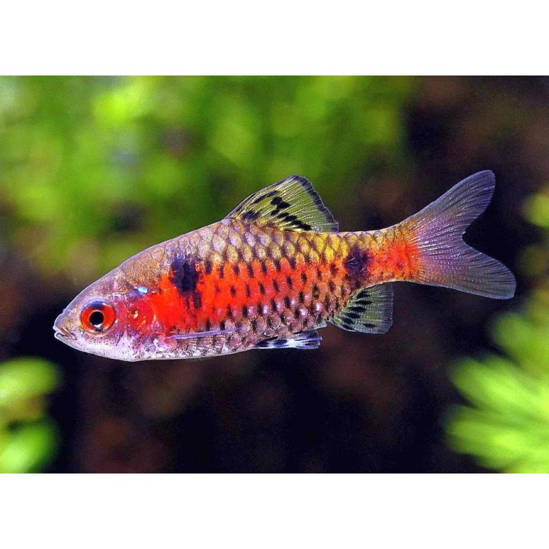 Vendita pesci per acquario online
